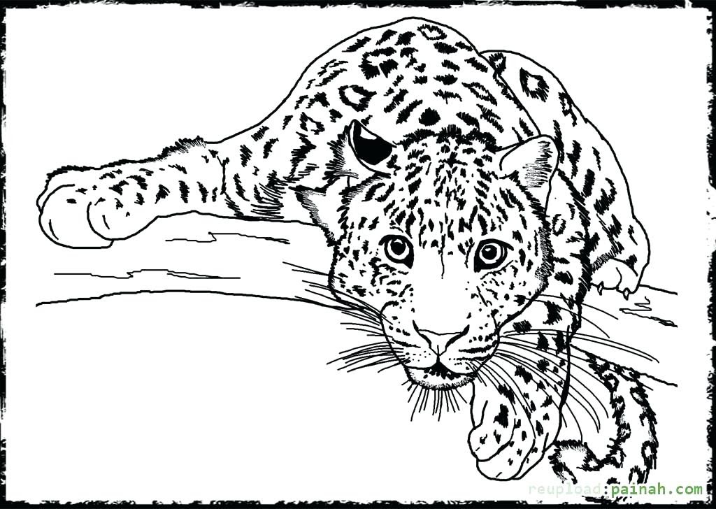 Realistic Wild Animal Coloring Pages at GetColorings.com ...