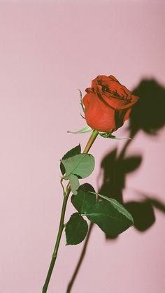 unduh gambar bunga mawar layu tumblr