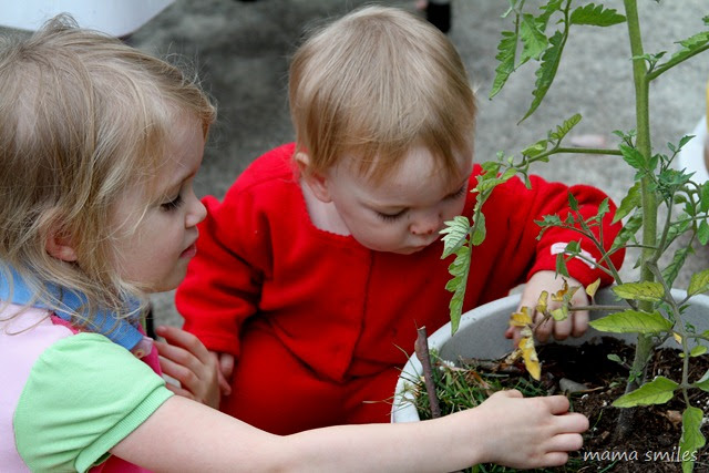 Emma and Lily build a fairy garden in the pot for a tomato plant