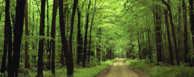 green-forest-natural-road