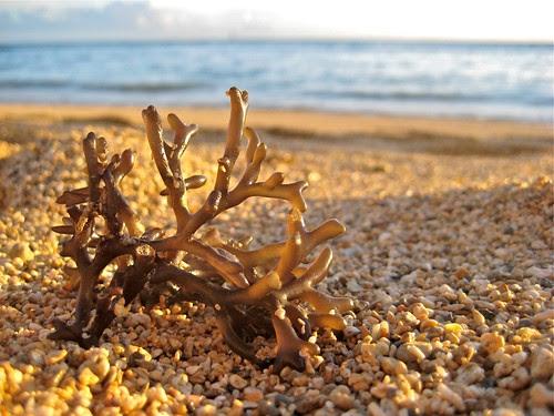 Seaweed on Waikiki 10 10