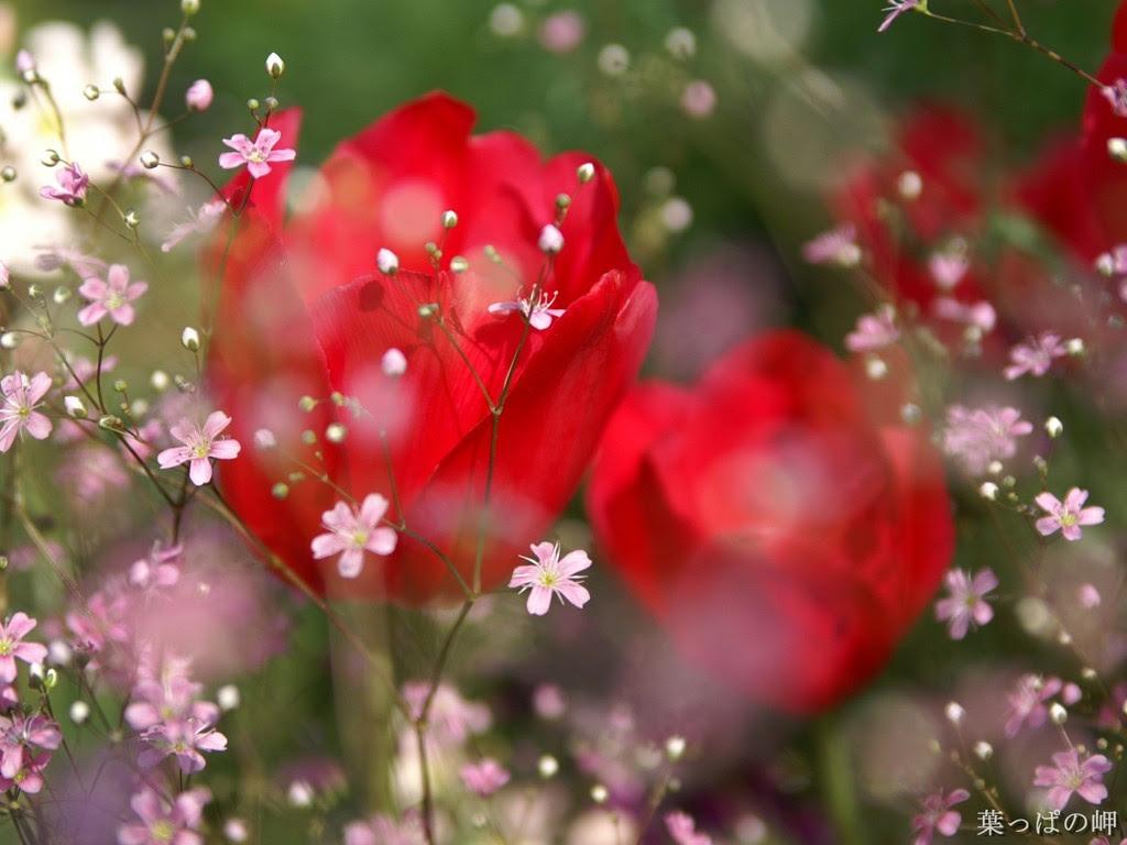 http://25.media.tumblr.com/tumblr_lny0kjBYs71qgwuwko1_1280.jpg