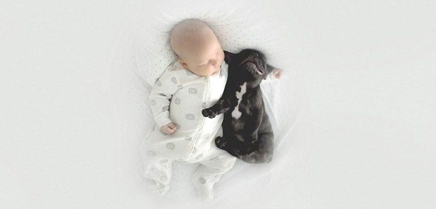 bebe_y_bulldog_7