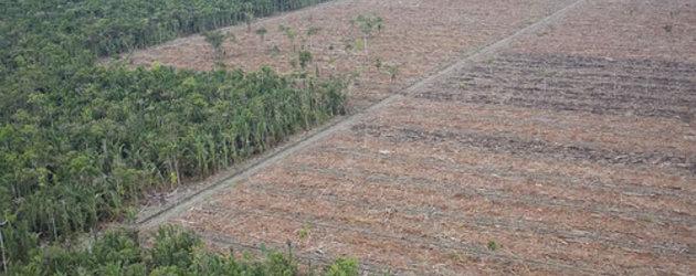 MIFEE: A face furtiva de conflito na Papua Ocidental