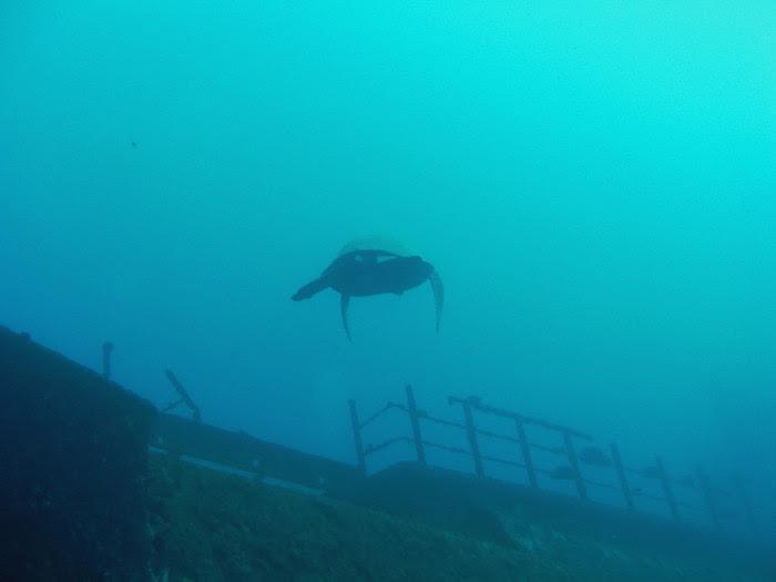 scuba diving oahu 051