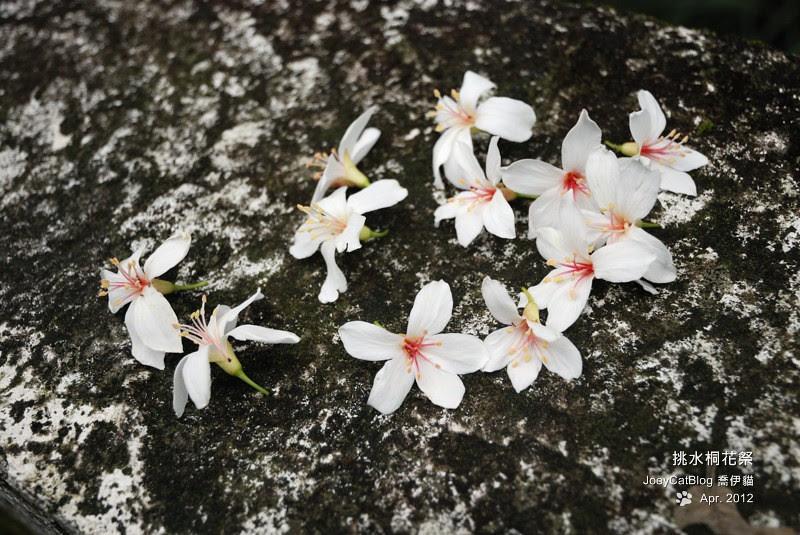 2012挑水桐花祭DSC_4513