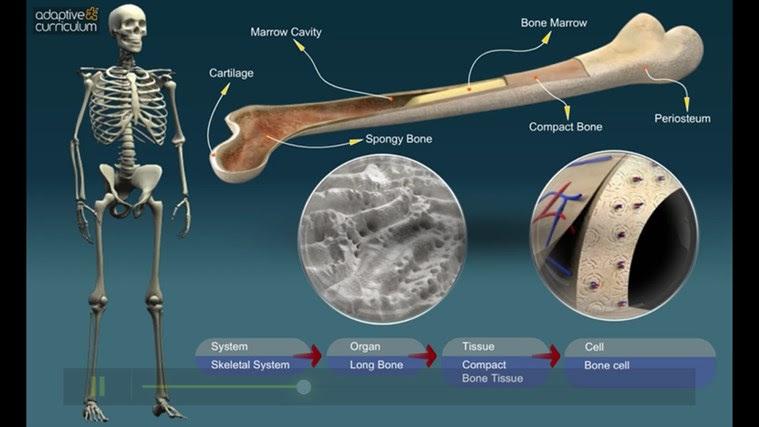AC Life Science: The Structure of Bones snímek obrazovky 4