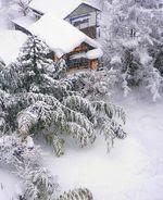 Bamboo_snow