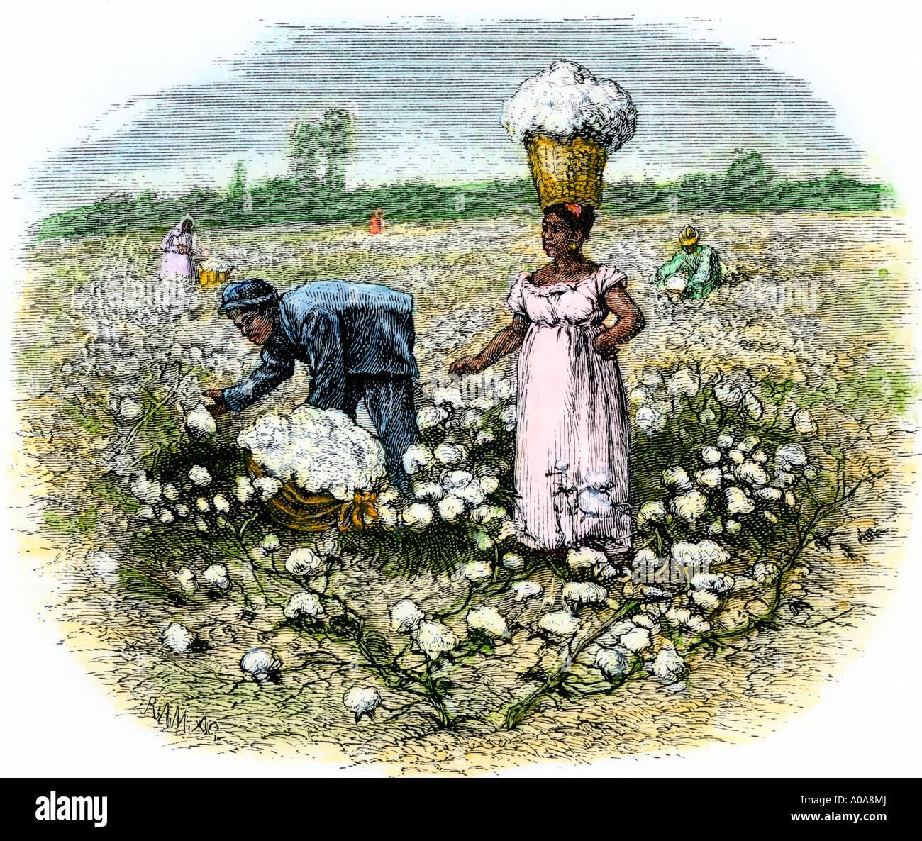 Resultado de imagen para picking cotton 1860