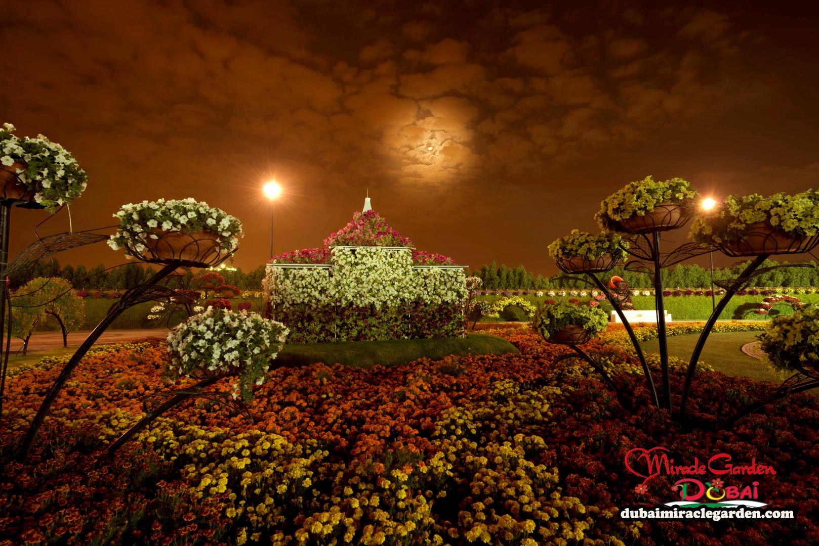 Dubai Miracle Garden 02