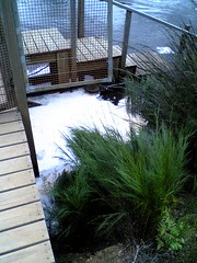 River foam from natural detergents