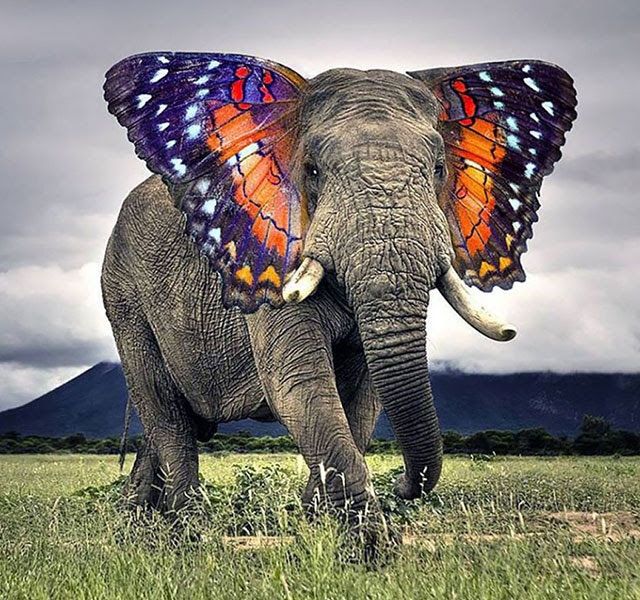new hybrid animals photoshop thumb640