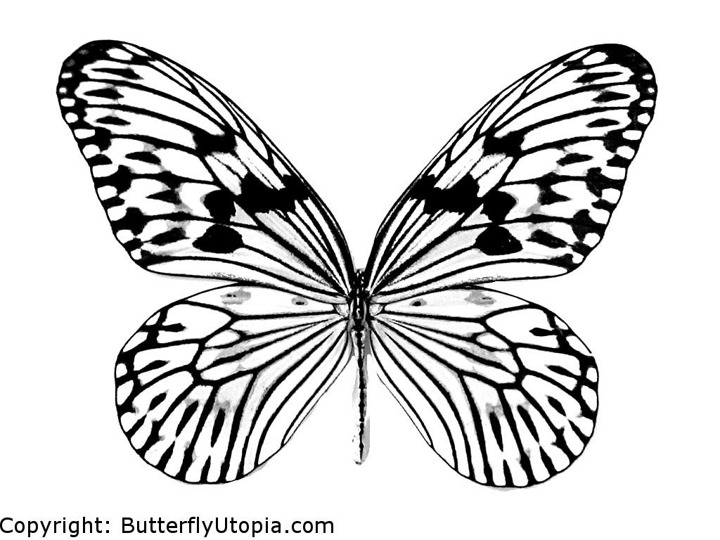 Butterfly Coloring Page18