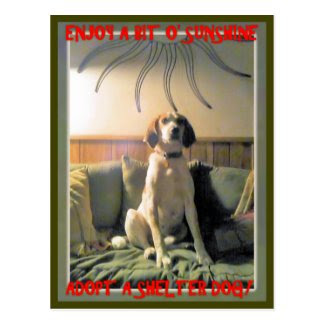 Sunshine Shelter Dog Postcard