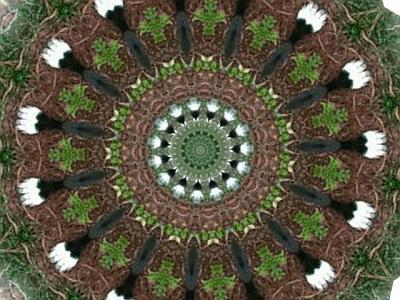 spyderscopeweb