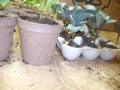 from egg carton to pots