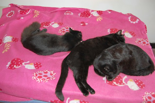 resting kittens