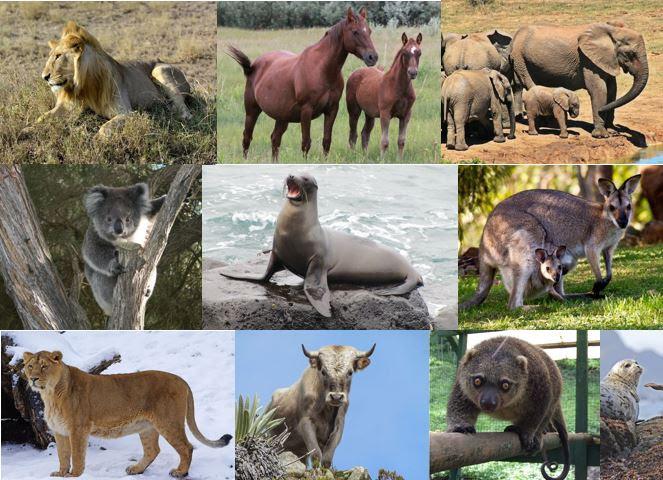 460 Gambar Hewan Herbivora Dan Namanya HD Terbaik