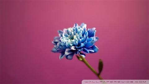 blue flower wallpaper. Blue Flower desktop wallpaper