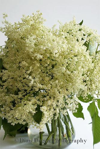 Elder's Flower