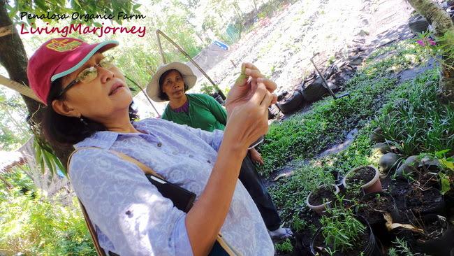 Penalosa Organic Farm