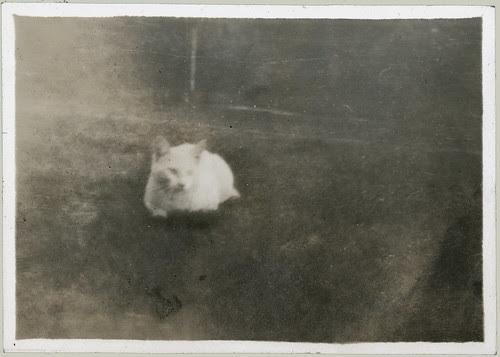 The forgotten cat.