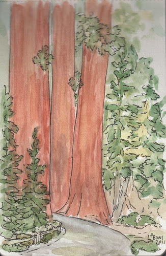 Mariposa Grove sketch