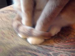 buddy feet