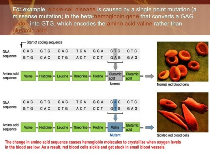 Bits And Bytes Of Biology Missence Mutation-9311