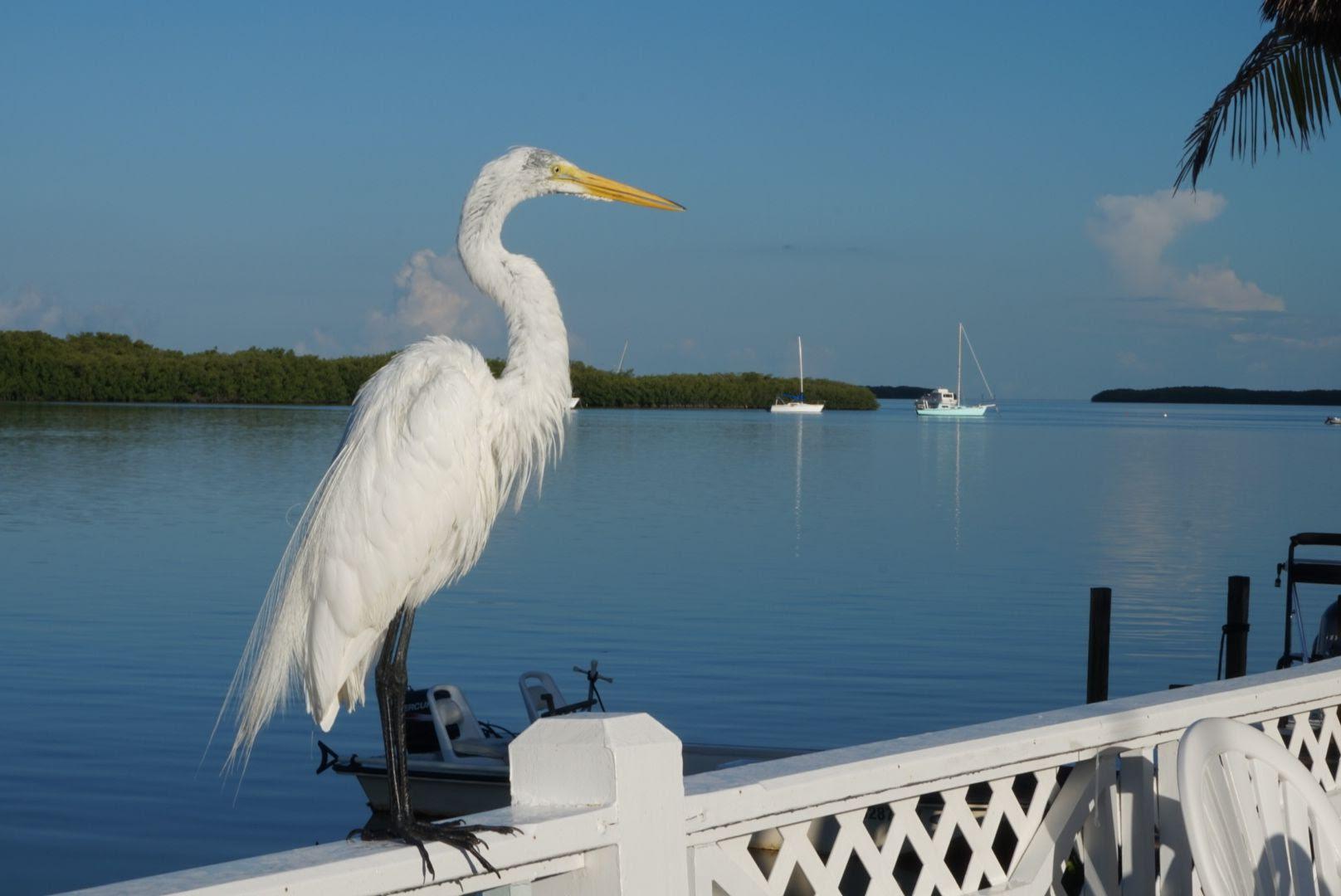 View from Lorelei Cabana Bar