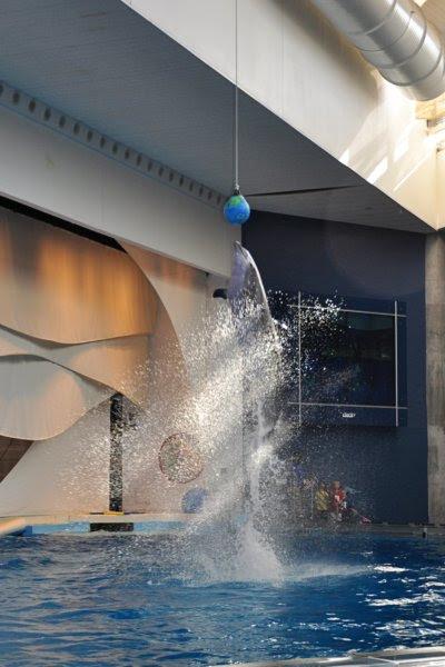 Go Dolphin Go!