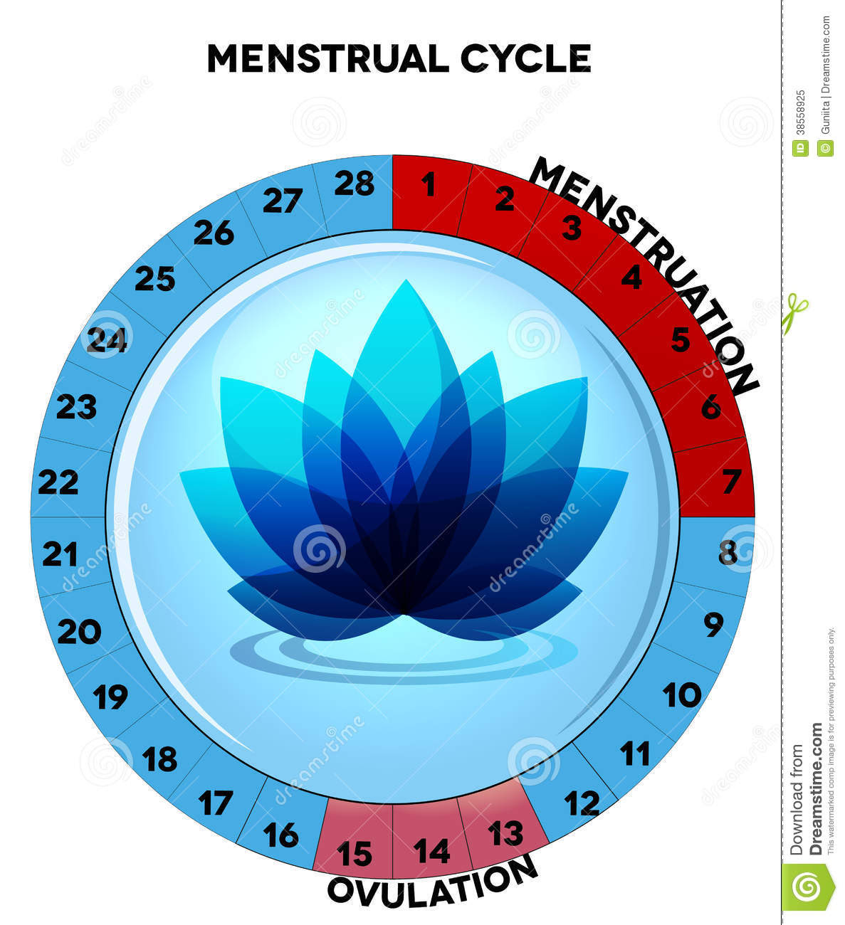 blue menstrual cycle chart flower average twenty eight days menstruation ovulation beautiful middle 38558925