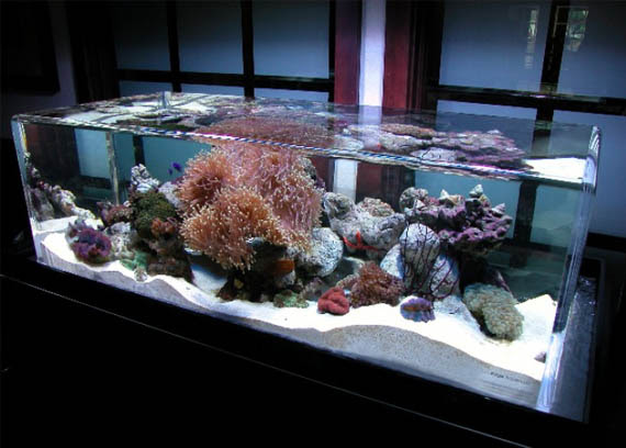 Aquarium | Home Interior Design, Kitchen and Bathroom Designs ...