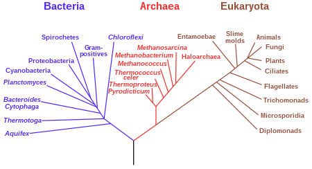 image of phylogenetic tree of life
