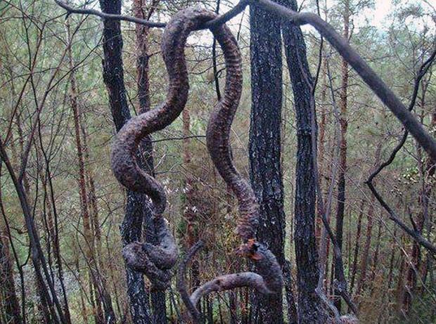 Cobra gigante morreu após raio na China e virou lanche de moradores (Foto: Europics/Newscom/EFE)