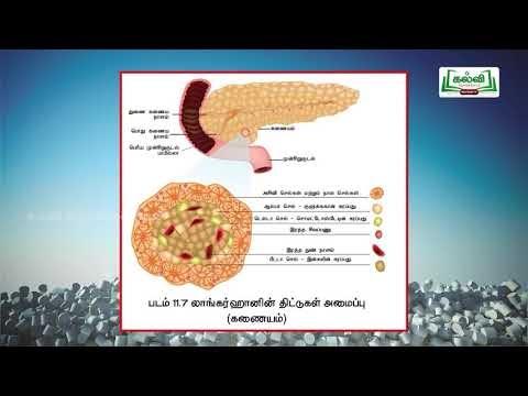 11th Physics துகள்களாலான அமைப்பு. அலகு 5 பகுதி 6 Kalvi TV