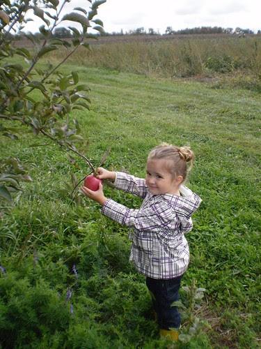 Apple Orchard (41)