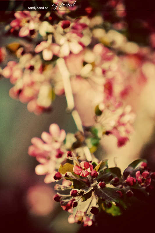 ~ 137/365 Colourful Spring ~
