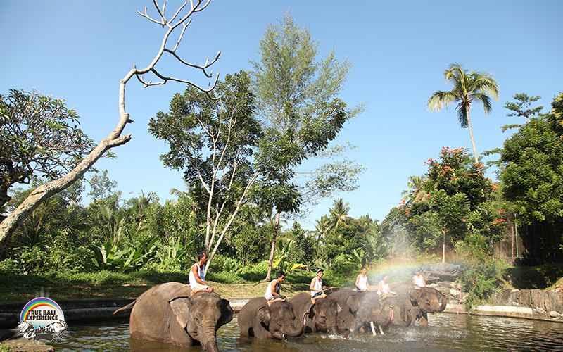 bali_elephant_camp8