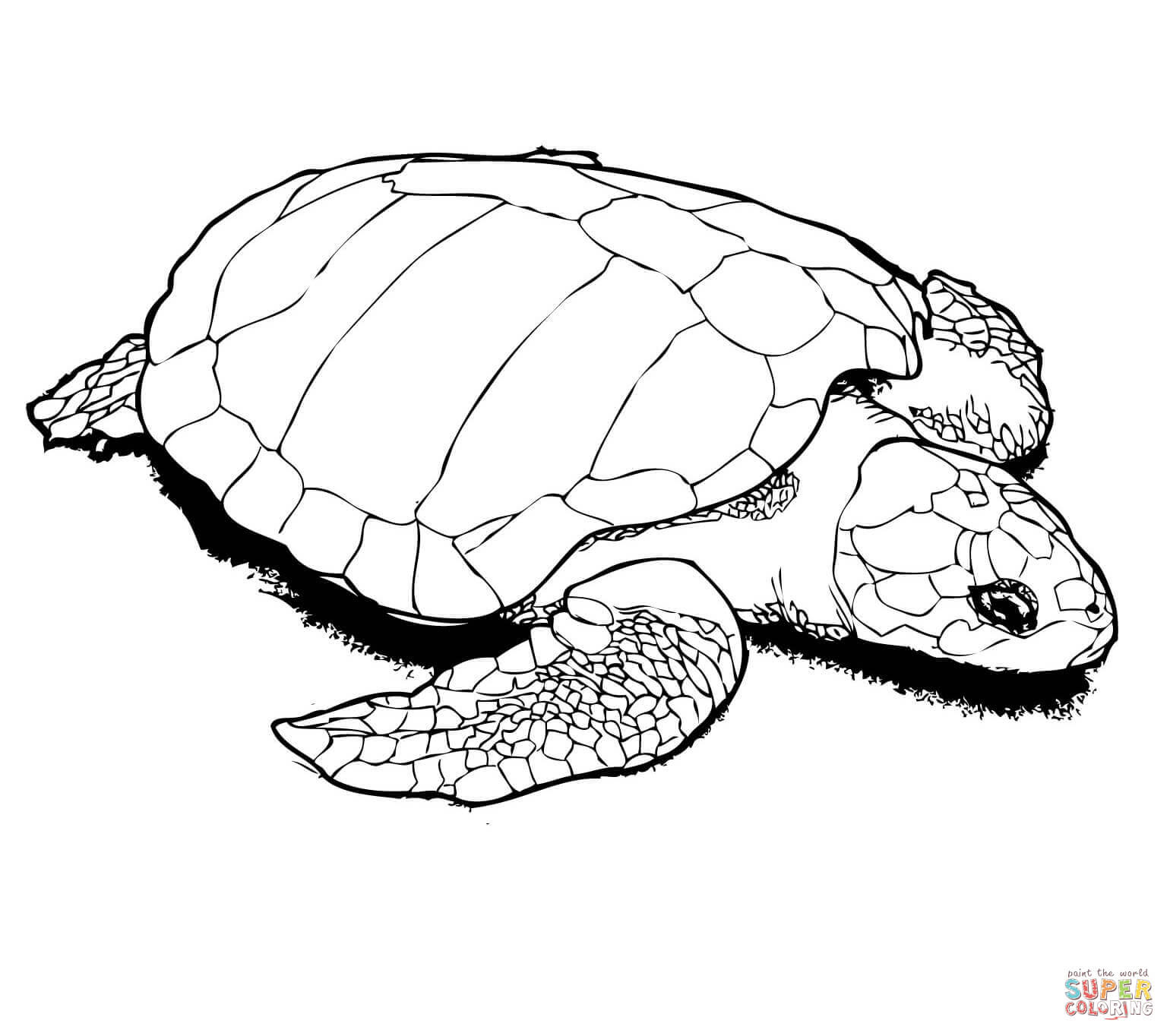 850 Coloring Pages For Adults Turtle Download Free Images