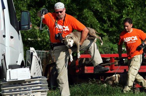 Dogfighting Raids Help
