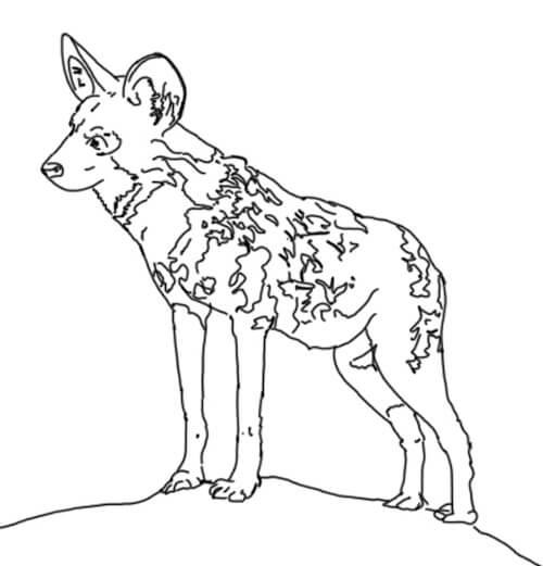 zeichnen für anfänger tiere