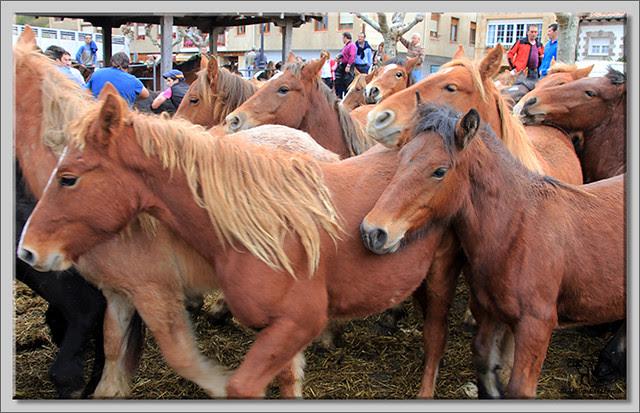 6 Feria de ganado en Potes 2013