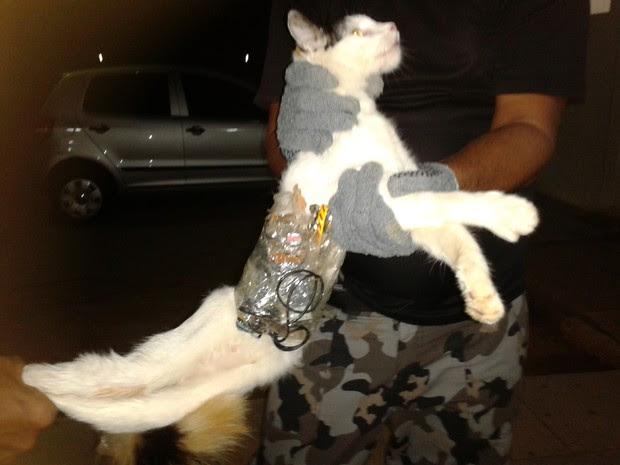 gato serra presídio (Foto: Divulgação/Superintendencia Geral do Sistema Penitenciário de Alagoas )