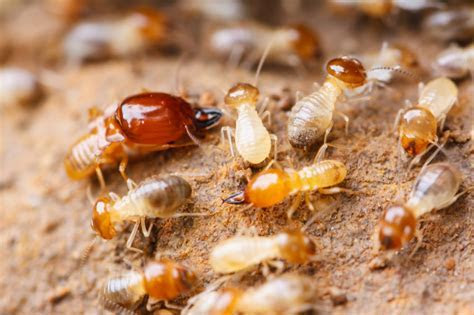 Can a Brick Home Have a Termite Infestation?   Arrow Termite & Pest Control