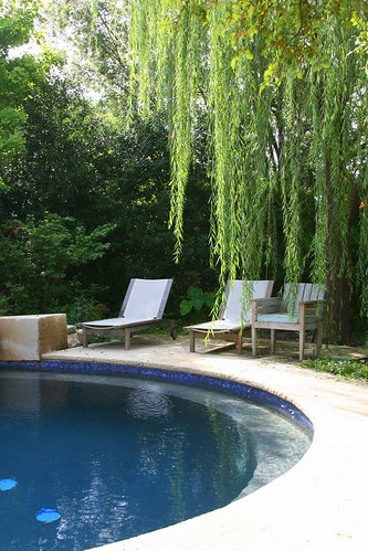 relaxing under the willow