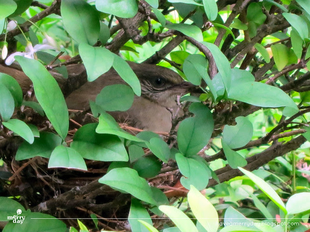 Bird in a bush