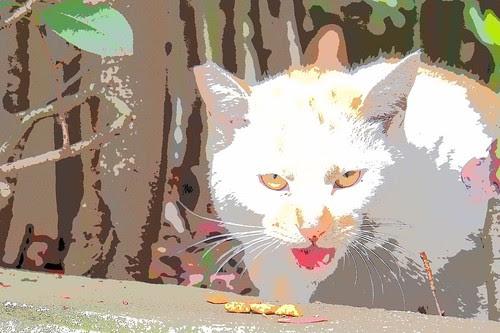 リーニュクレール猫