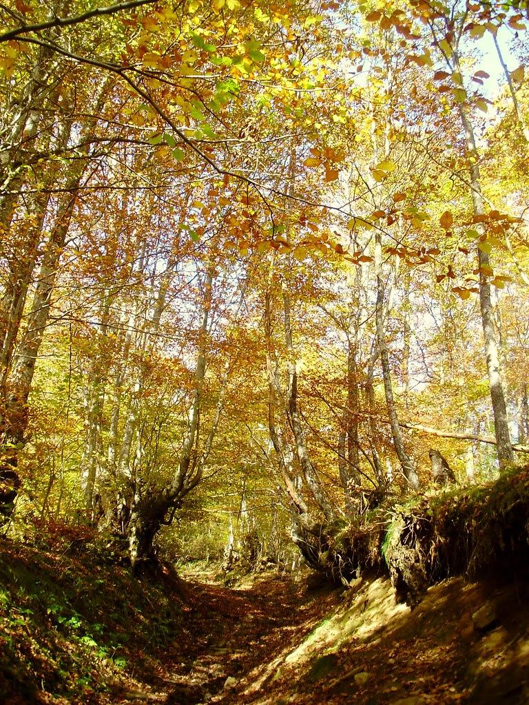 Bosque de Lindes 013