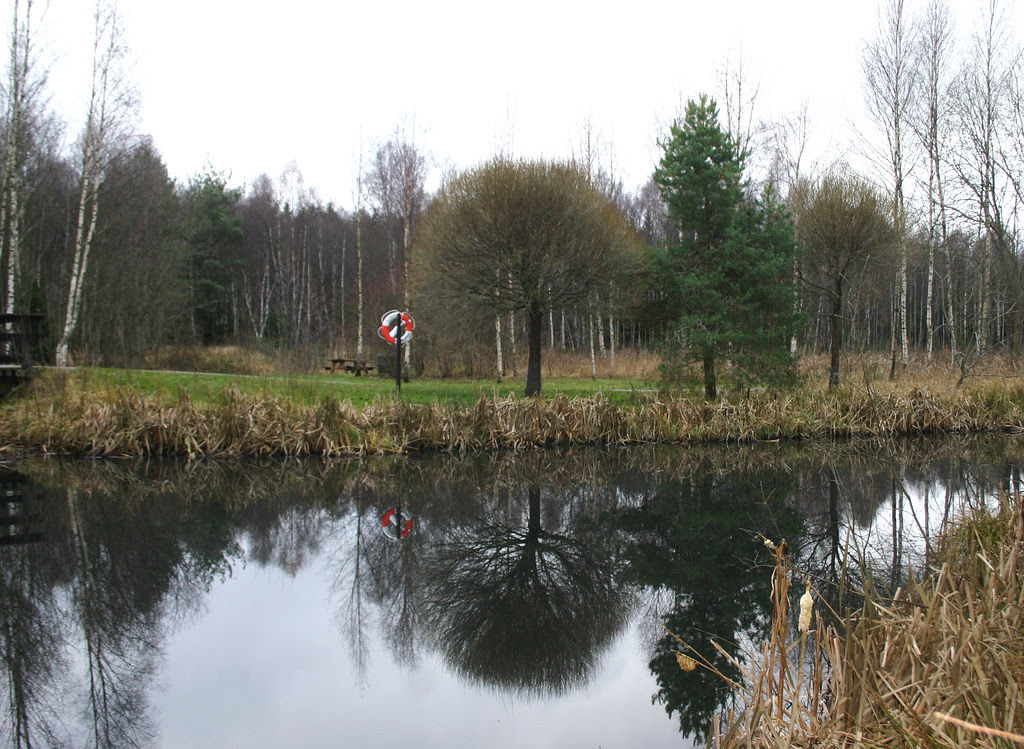 Park Reflection
